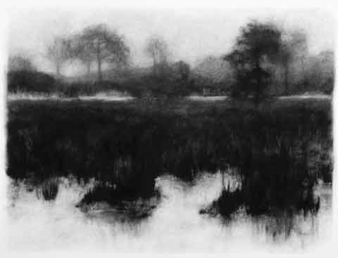 drawing titled Black Swampgrass
